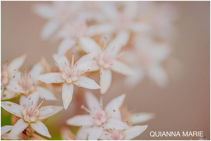 QuiannaMarie_0496