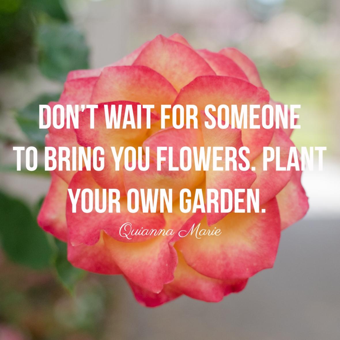 plant garden-8