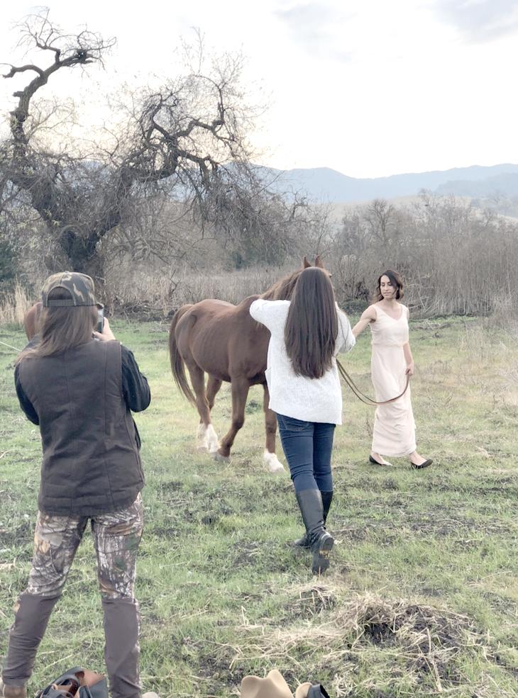 BTS horse